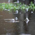 آغاز بارش ها در تبریز