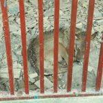 انتشار فیلم و تصاویری از وضعیت حیوانات در باغ وحش باغلار باغی خبر ساز شد