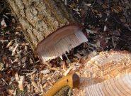 چوب حراج به چوب های ارسباران