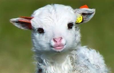 لطفا گوسفند باشید مهرشاد مرتضوی | بی قانون