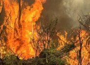 ۲۰ هزار هکتار از اراضی ملی آذربایجان شرقی در آتش سوخت